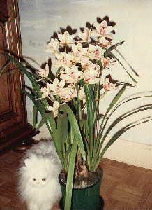 orchid es. Black Bedroom Furniture Sets. Home Design Ideas